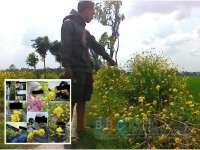 Dipetik Sembarangan, Bunga Kenikir di Desa Bendo Banyak yang Rusak