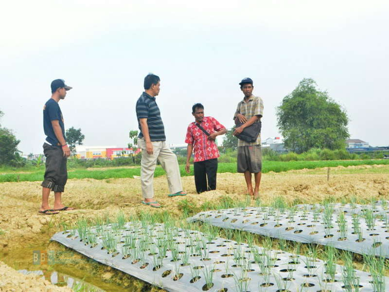 Maksimalkan Lahan Pertanian Dengan Teknik Diversifikasi