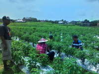 Kuswiyanto Apresiasi Kelompok Tani Organik di Desa Ngampel