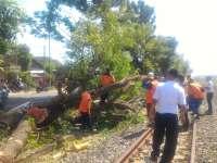 Kereta Tabrak Batang Pohon yang Melintang di Rel
