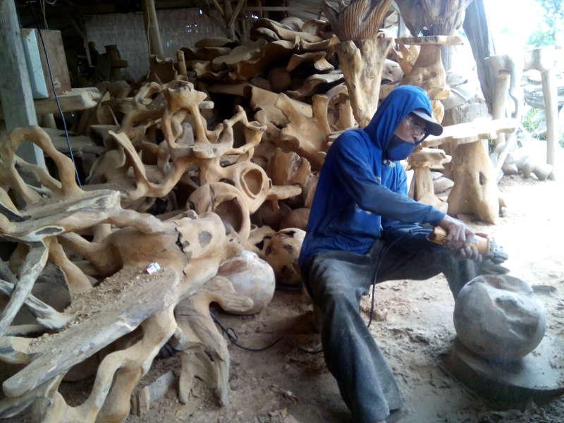 Masuk Pedalaman Hutan Mencari Bonggol Kayu Jati