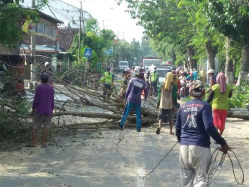 Ada Penebangan Pohon di Dander, Polisi Atur Lalu Lintas