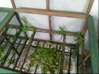 Beternak Reptil yang Cukup Menjanjikan