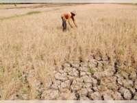 Keikutsertaan Program Asuransi Pertanian Masih Minim