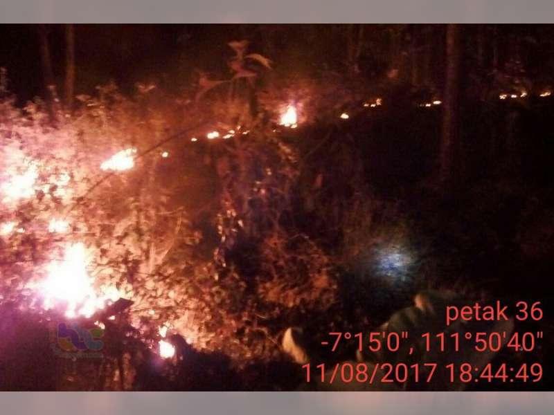 Puluhan Hektare Hutan dan Lahan di Bojonegoro, Terbakar Selama Musim Kemarau Ini