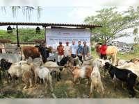 Karyawan EMCL Salurkan Hewan Kurban Pada Warga Gayam