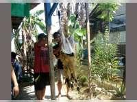 PMII Bojonegoro Bagikan Daging Kurban untuk Warga