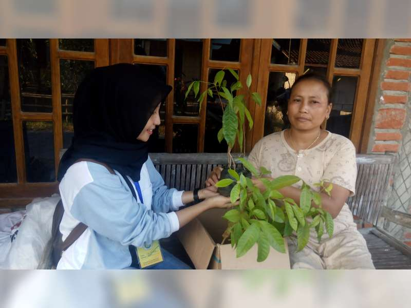 KKM IKIP PGRI Bojonegoro Bagikan 100 Bibit Pohon Mahoni