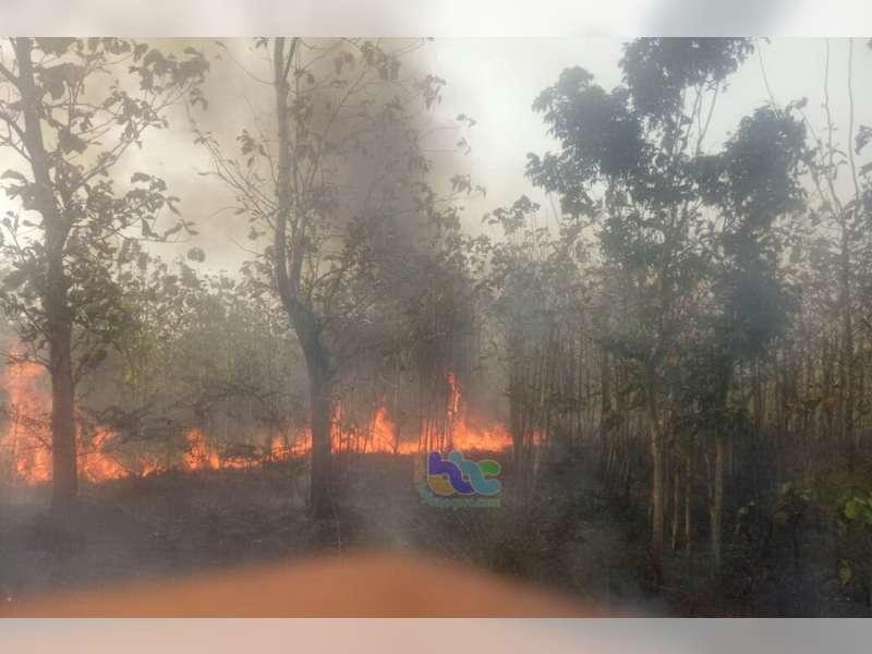 Semak Belukar Hutan di Ngasem Kembali Terbakar