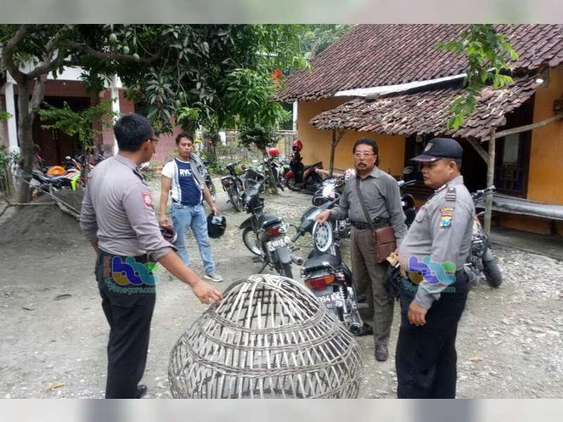 Sabung Ayam di Sumberrejo Digrebek Polisi, 2 Orang Saksi Diamankan Petugas