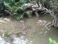Banjir Bandang Rendam Perkebunan Salak Wedi