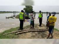 Tanggul Kali di Desa Sambiroto Kecamatan Kapas Jebol, 200 Hektare Padi Terendam