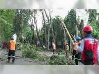 Antisipasi Bencana, Pemkab Pangkas Dahan dan Ranting Pohon dalam Kota