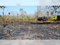 Minimalisir Potensi Kebakaran Hutan, Perhutani Blora Gunakan Aplikasi Android