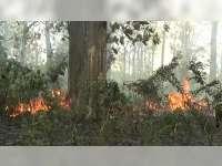 Semak Belukar Hutan Jati di Dander Bojonegoro Terbakar
