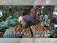 Harga Telur Ayam Broiler di Bojonegoro Melambung