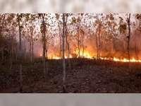 Kebakaran Hutan Terjadi di Kecamatan Trucuk Bojonegoro