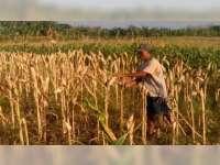 Jagung Menjadi Pilihan Petani di Kawasan Perbukitan Bojonegoro
