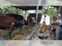 Disnakan Bojonegoro Periksa Kondisi Hewan Kurban di Lapak Penjual dan Peternak