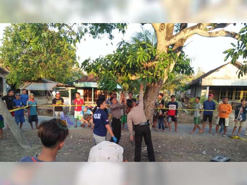 Tersengat Listrik, Warga Kedungadem Bojonegoro Meninggal Dunia di Atas Pohon Mangga