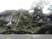 5 Rumah dan 2 Kandang di Gondang Bojonegoro Roboh Diterjang Angin
