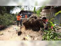 Dapur Milik Warga Ngasem Bojonegoro Rusak Tertimpa Rumpun Bambu Roboh