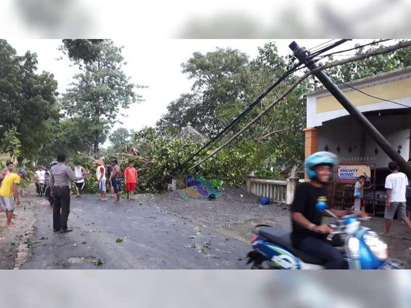 Pohon di Kuburan Tanjungharjo Kapas Bojonegoro Roboh dan Timpa Kabel Listrik