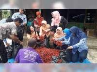Harga Cabai Anjlok, DWP dan ASN di Blora Borong Cabai dari Petani