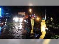 Sebuah Mobil Tertimpa Pohon Roboh di Jalan Raya Kapas Bojonegoro