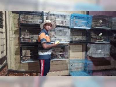 Berawal dari Hobi, Bripka Arip Nirwanto Sukses Beternak Burung Lovebird