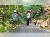 Tanah Longsor dan Pohon Tumbang Terjadi di Jalan Poros Kecamatan Malo Bojonegoro