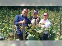 Masturi Warga Karangboyo Blora, Sukses Kembangkan Melon Orange