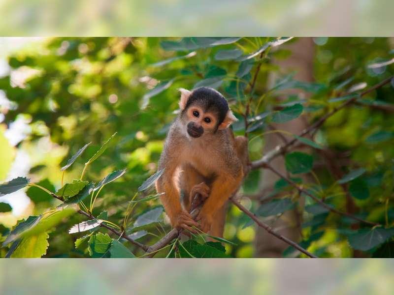 Cacar Monyet: Ancaman Virus Negeri Seberang