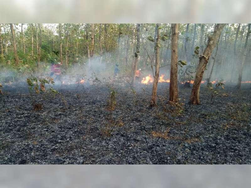 5 Hektare Semak Belukar Hutan Jati di Dander Bojonegoro Terbakar
