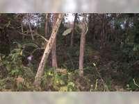 Mayat Laki-Laki Tanpa Identitas Ditemukan di Dalam Karung di Hutan Randublatung Blora