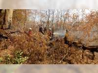 Sejumlah Pohon di Area Pemakamam Desa Sumberrejo Trucuk Bojonegoro, Kembali Terbakar