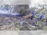 Akibat Bakar Sampah, Rumpun Bambu dan Semak di Kedungadem Bojonegoro Terbakar