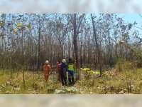 Semak Belukar di Area Lahan Jati Milik Warga di Baureno Bojonegoro Terbakar