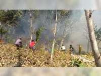 1,5 Hektare Semak Belukar dan Rumpun Bambu di Kedungadem Bojonegoro Terbakar