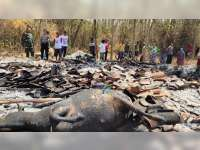 Kebakaran Kandang di Kepohbaru Bojonegoro, 2 Ekor Sapi Turut Terpanggang Api