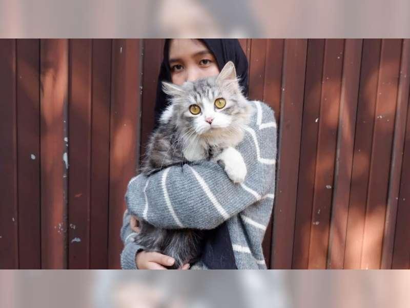 Mengenal Penularan Toksoplasmosis Dan Kaitannya Dengan Kucing